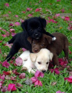 three puppies